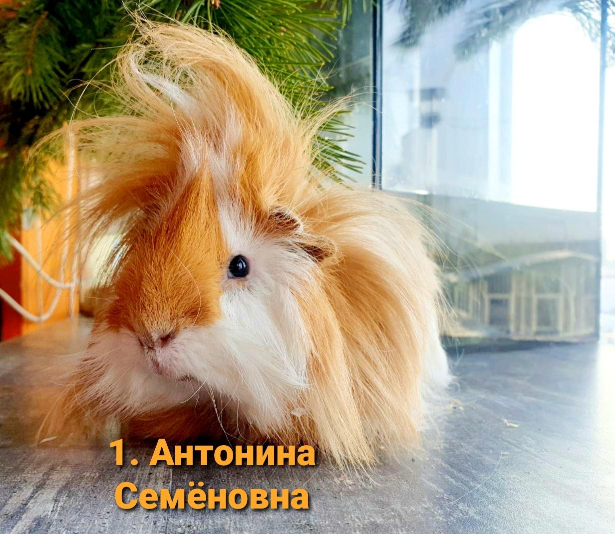 Антонина Семёновна